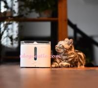 Petkit Eversweet 寵物智能飲水機 飲水神器 2公升